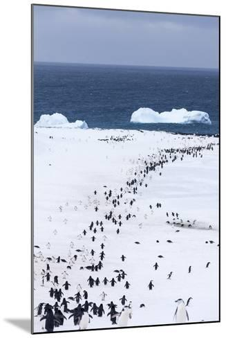 Chinstrap Penguins in Snow, Deception Island, Antarctica-Paul Souders-Mounted Photographic Print