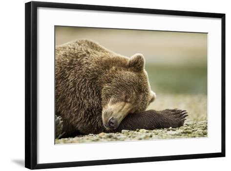 Sleeping Brown Bear, Katmai National Park, Alaska-Paul Souders-Framed Art Print