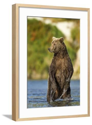 Brown Bear, Katmai National Park, Alaska-Paul Souders-Framed Art Print