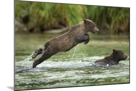 Brown Bear Cub, Katmai National Park, Alaska-Paul Souders-Mounted Photographic Print