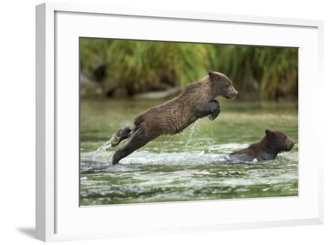 Brown Bear Cub, Katmai National Park, Alaska-Paul Souders-Framed Art Print