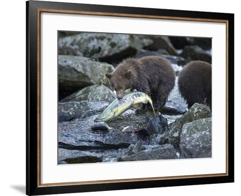 Brown Bear Cub and Huge Salmon, Katmai National Park, Alaska-Paul Souders-Framed Art Print