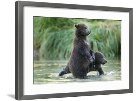 Brown Bear Cubs, Katmai National Park, Alaska-Paul Souders-Framed Art Print