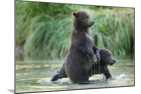 Brown Bear Cubs, Katmai National Park, Alaska-Paul Souders-Mounted Photographic Print