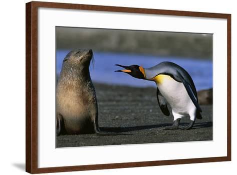King Penguin Confronting Unconcerned Fur Seal-Paul Souders-Framed Art Print