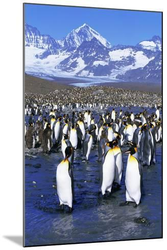 King Penguin Colony-Paul Souders-Mounted Photographic Print