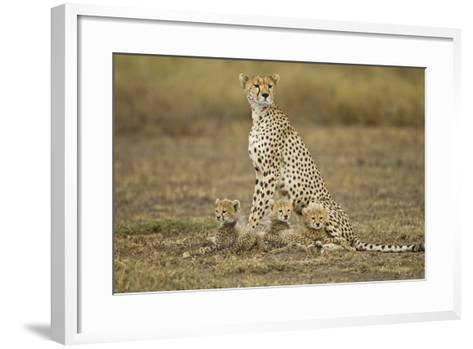 Cheetah Cubs and their Mother-Paul Souders-Framed Art Print