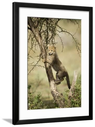 Cheetah Cub at Ngorongoro Conservation Area, Tanzania-Paul Souders-Framed Art Print