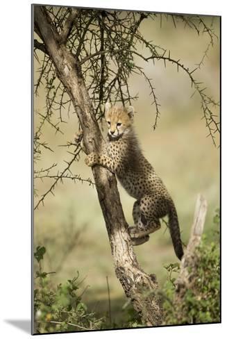 Cheetah Cub at Ngorongoro Conservation Area, Tanzania-Paul Souders-Mounted Photographic Print