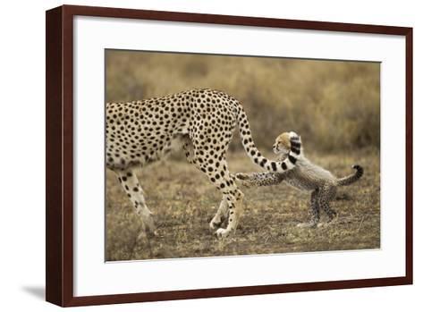 Cheetah Cub and Mother-Paul Souders-Framed Art Print