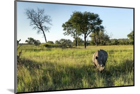 White Rhinoceros, Sabi Sabi Reserve, South Africa-Paul Souders-Mounted Photographic Print