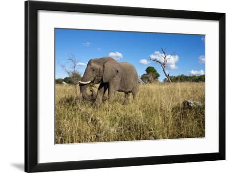 Elephant, Sabi Sabi Reserve, South Africa-Paul Souders-Framed Art Print
