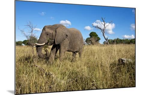 Elephant, Sabi Sabi Reserve, South Africa-Paul Souders-Mounted Photographic Print