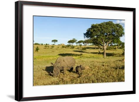 Black Rhino, Sabi Sabi Reserve, South Africa-Paul Souders-Framed Art Print