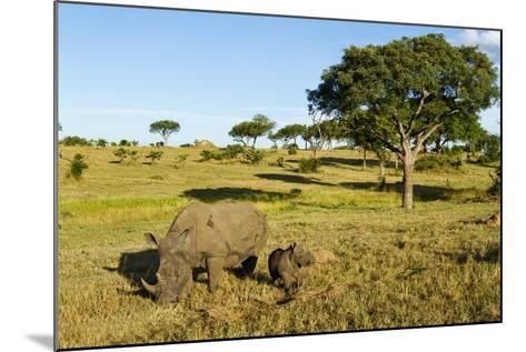 Black Rhino, Sabi Sabi Reserve, South Africa-Paul Souders-Mounted Photographic Print