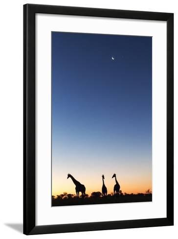 Giraffe, Makgadikgadi Pans National Park, Botswana-Paul Souders-Framed Art Print
