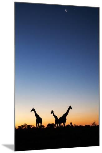 Giraffe, Makgadikgadi Pans National Park, Botswana-Paul Souders-Mounted Photographic Print