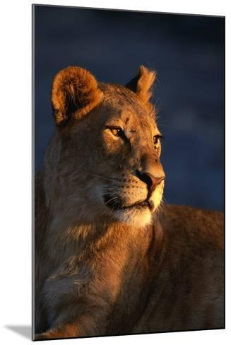 Female Lion-Paul Souders-Mounted Photographic Print