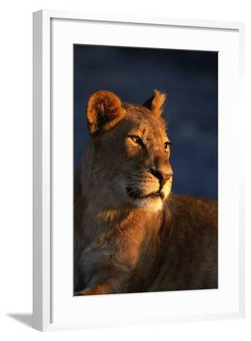 Female Lion-Paul Souders-Framed Art Print
