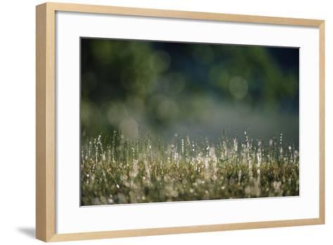 Morning Dew on Grass-Paul Souders-Framed Art Print