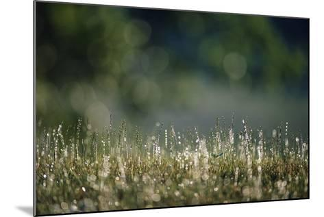 Morning Dew on Grass-Paul Souders-Mounted Photographic Print
