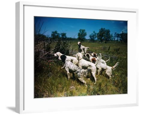 Hunting Dogs on Point--Framed Art Print
