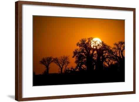 Sunrise at Baines Baobabs, Nxai Pan National Park, Botswana-Paul Souders-Framed Art Print