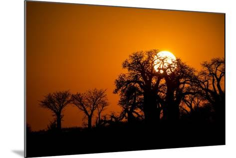 Sunrise at Baines Baobabs, Nxai Pan National Park, Botswana-Paul Souders-Mounted Photographic Print