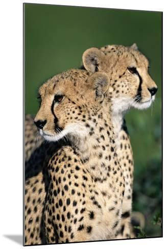 Two Cheetahs-Paul Souders-Mounted Photographic Print