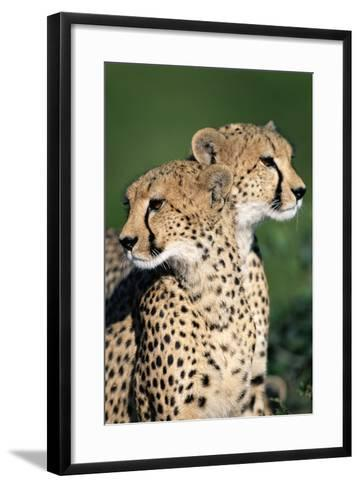 Two Cheetahs-Paul Souders-Framed Art Print