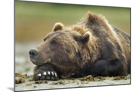 Brown Bear, Katmai National Park, Alaska-Paul Souders-Mounted Photographic Print
