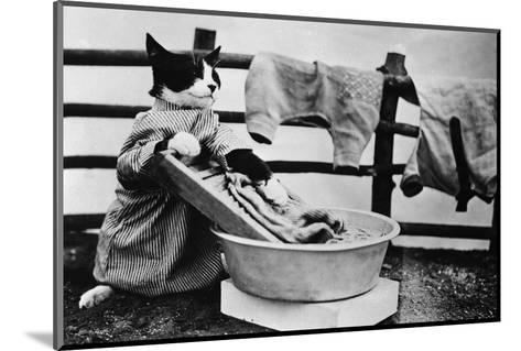Dressed Up Cat Washing Clothes in Wash Tub--Mounted Photographic Print