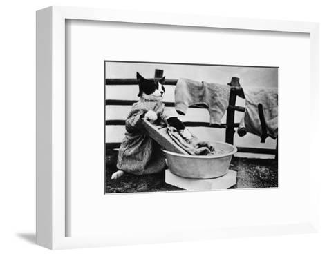 Dressed Up Cat Washing Clothes in Wash Tub--Framed Art Print