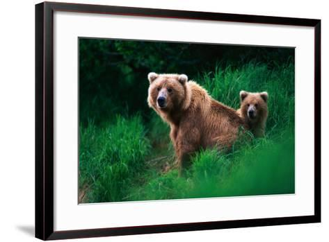 Brown Bear Sow and Cub--Framed Art Print