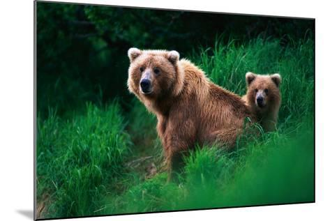 Brown Bear Sow and Cub--Mounted Photographic Print