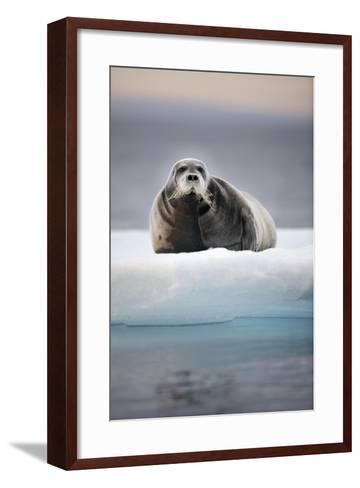 Bearded Seal, on Iceberg, Svalbard, Norway--Framed Art Print