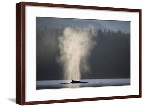 Humpback Whale Spouting in Frederick Sound at Dawn--Framed Art Print