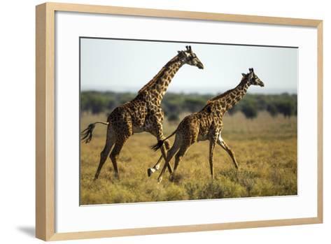 Giraffe Herd--Framed Art Print