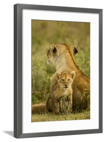 Lion Cub with Mother--Framed Art Print