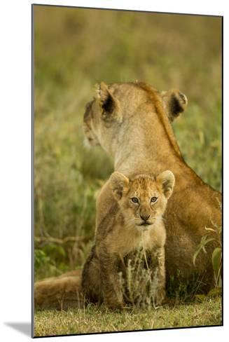 Lion Cub with Mother--Mounted Photographic Print