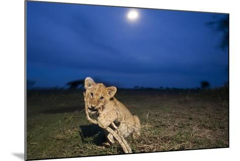 Lion Cub at Night--Mounted Photographic Print
