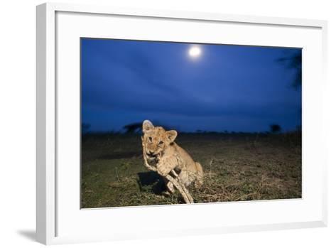 Lion Cub at Night--Framed Art Print