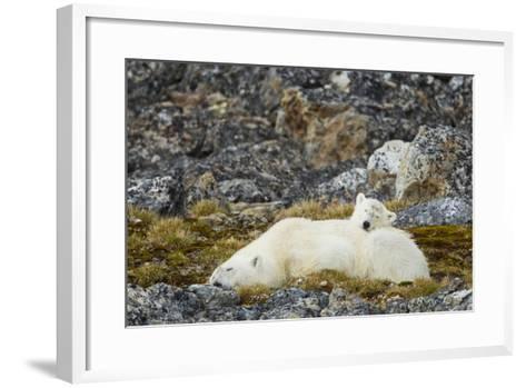 Polar Bear, Svalbard, Norway-Paul Souders-Framed Art Print