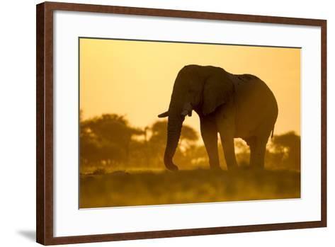 Elephant at Water Hole, Nxai Pan National Park, Botswana-Paul Souders-Framed Art Print