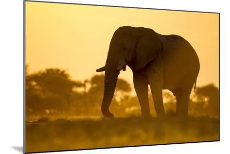 Elephant at Water Hole, Nxai Pan National Park, Botswana-Paul Souders-Mounted Photographic Print