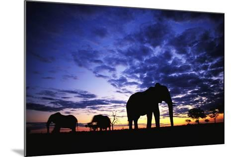 Elephant Silhouettes-Paul Souders-Mounted Photographic Print