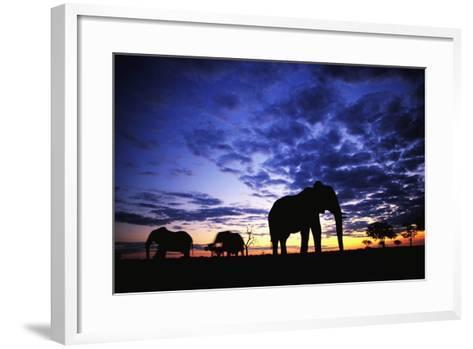 Elephant Silhouettes-Paul Souders-Framed Art Print