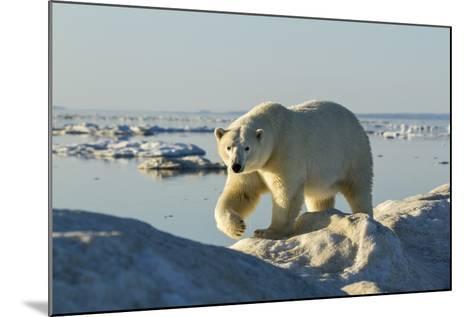 Polar Bear, Hudson Bay, Nunavut, Canada-Paul Souders-Mounted Photographic Print