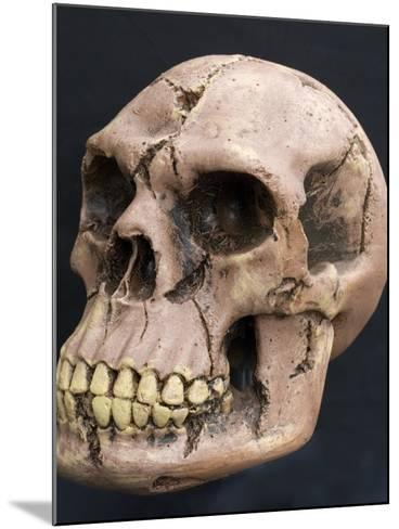 Neanderthal or Neandertal Man - Reconstructed Skull--Mounted Photographic Print
