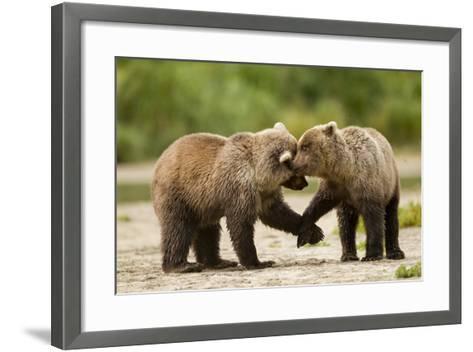 Brown Bear, Katmai National Park, Alaska-Paul Souders-Framed Art Print